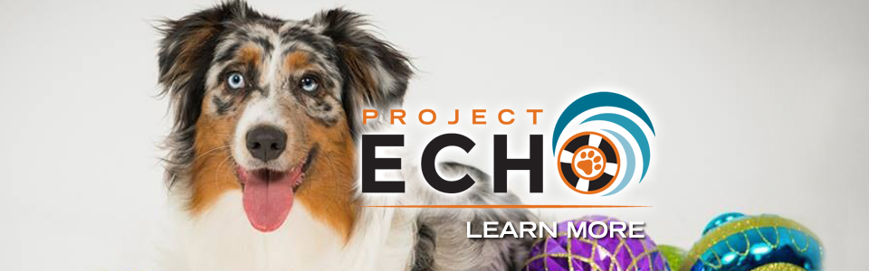 project_Echo_960