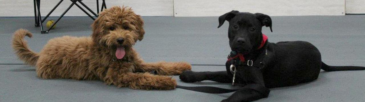 puppydaycare_header1
