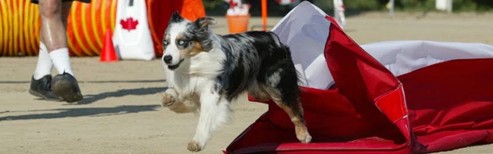 All About Dogs - dog exiting chute