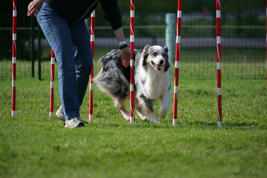 Agility Obstacles All About Dogs